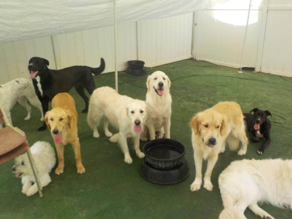 Dsl Dog Training Reviews