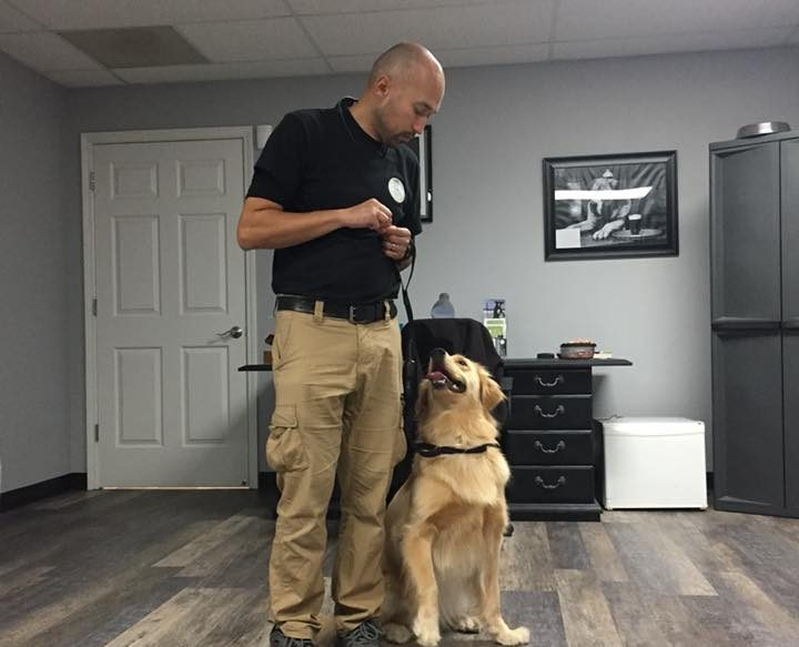 dog training in Charlotte