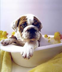 Take advantage of our new bathing services! Available to dogs during boarding, daycare and bootcamp stays.